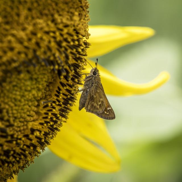 """""""Butterfly breakfast"""" stock image"""
