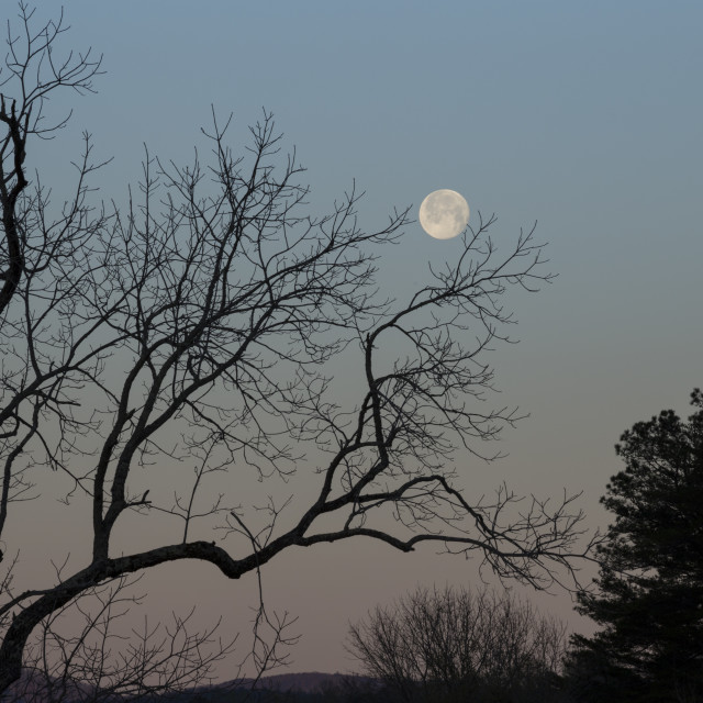 """Cades Cove Moonset"" stock image"