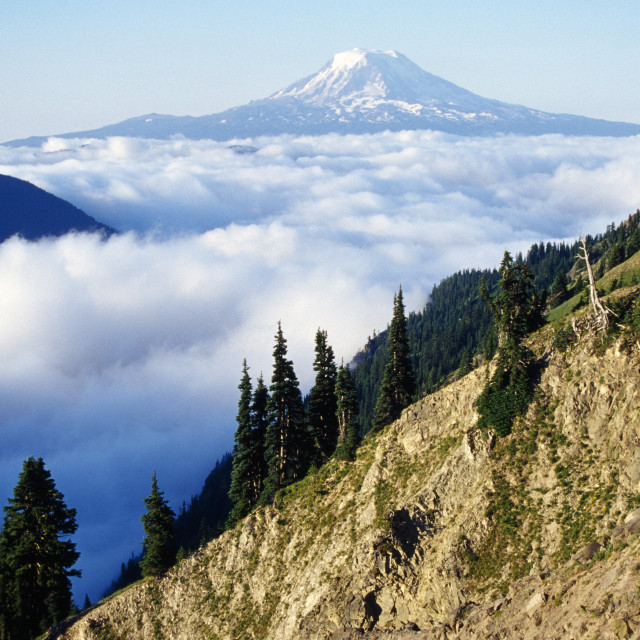 """""""Mount Adams Above Cloud-Filled Valley, Washington, United States Of America"""" stock image"""