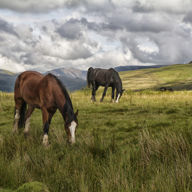 """Lake District Grazing"" stock image"
