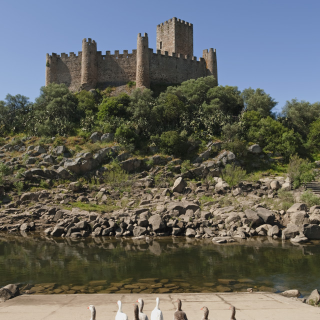"""""""Castelo De Almourol Standing In The Middle Of The River Tejo, Constructed In..."""" stock image"""