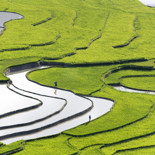 """rice fields on terraced of Mu Cang Chai"" stock image"