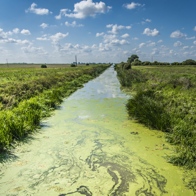 """Field drainage"" stock image"