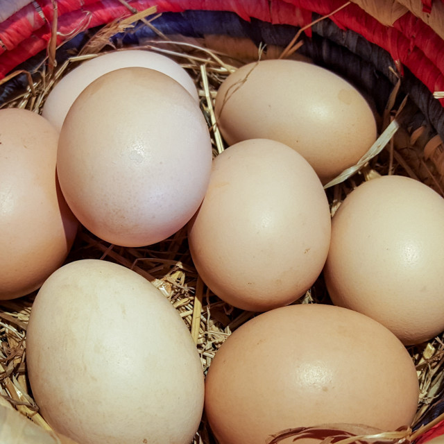 """Eggs in a Basket"" stock image"
