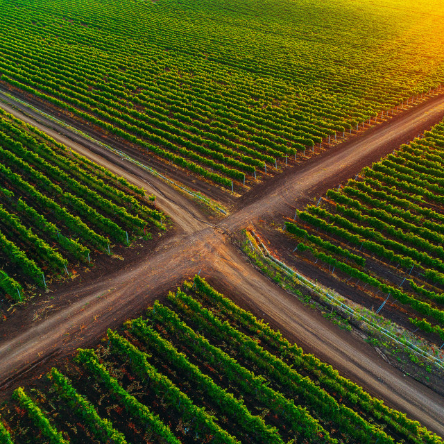 """A Beautiful Sunrise over vineyard in Europe"" stock image"