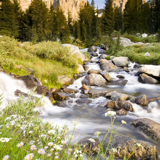 """""""Spring flowers and flowing water below Mount Ritter and Banner, Ansel Adams..."""" stock image"""