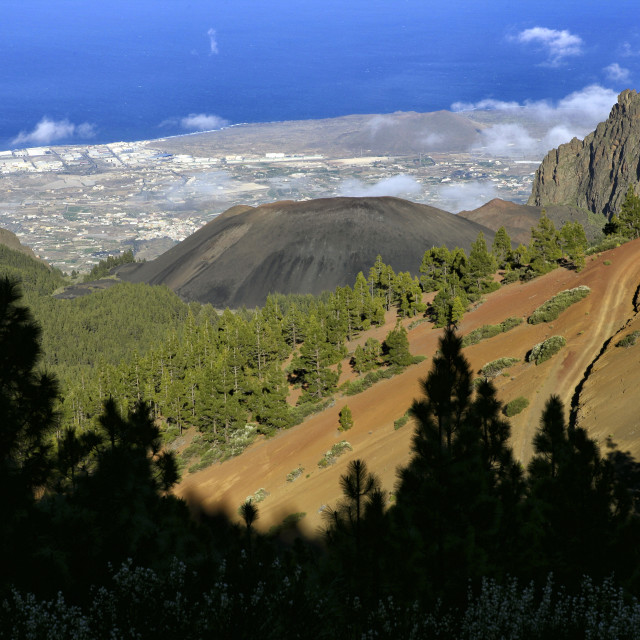 """Forest Crown Natural Park In Teide National Park, Tenerife, Canary Islands,..."" stock image"