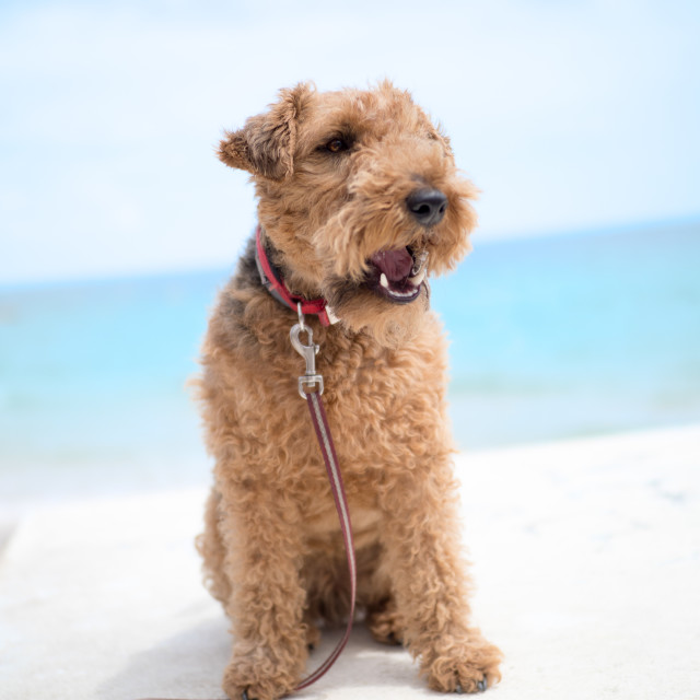 """""""Dog by the sea"""" stock image"""