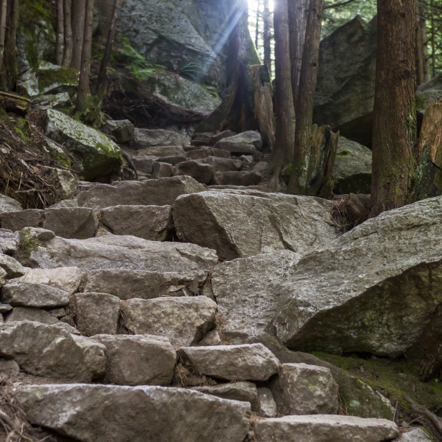 """""""Rock steps on a hiking path in the woods of Squamish, Canada."""" stock image"""
