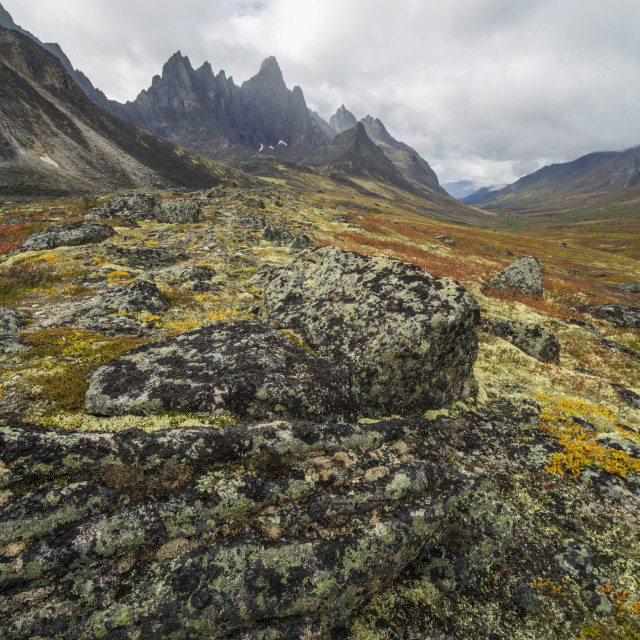 """""""The Tombstone Valley In Autumn Colours With Tombstone Mountain Rising Above..."""" stock image"""
