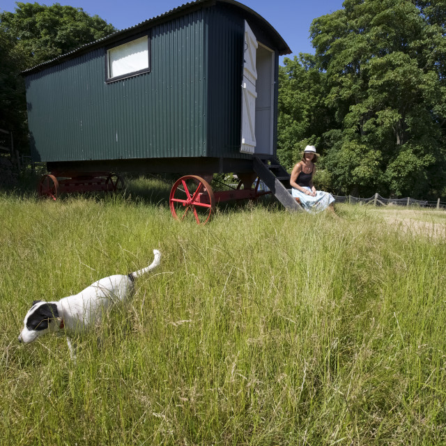 """""""Shepherd Hut Holiday Accommodation In Field On Farm With Puppy"""" stock image"""