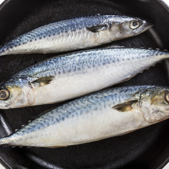 """""""Three Whole Mackerel Fish In A Cast Iron Skillet And A White Background;..."""" stock image"""