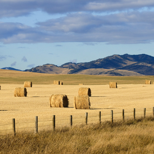"""""""Round Bales Of Hay On A Golden Field With Mountains In The Distance; Pincher..."""" stock image"""