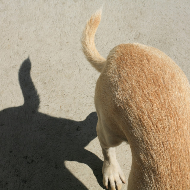 """dog back and tail with shadows"" stock image"