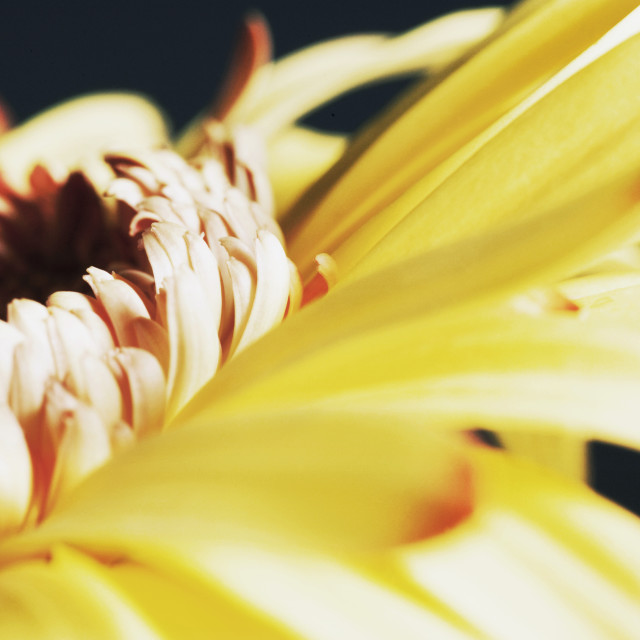 """A Yellow Flower"" stock image"