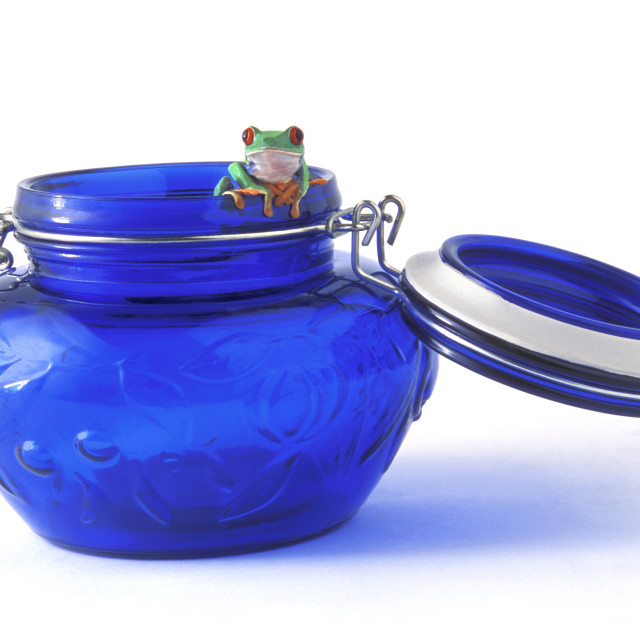 """Frog In A Jar"" stock image"