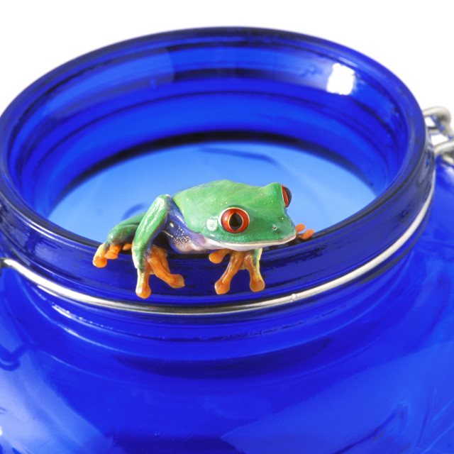 """Frog Hangs On Jar"" stock image"