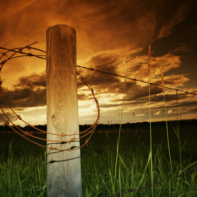 """""""Barbed Wire Coil On Fence Post"""" stock image"""