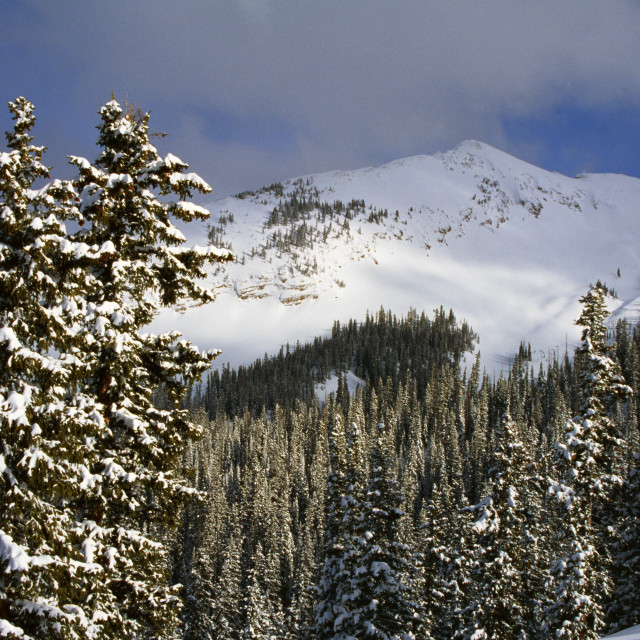"""""""Winter Mountain View Of Gunnison National Forest, Colorado, Usa"""" stock image"""