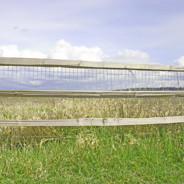 """""""Post And Rail Fence Along A Meadow"""" stock image"""