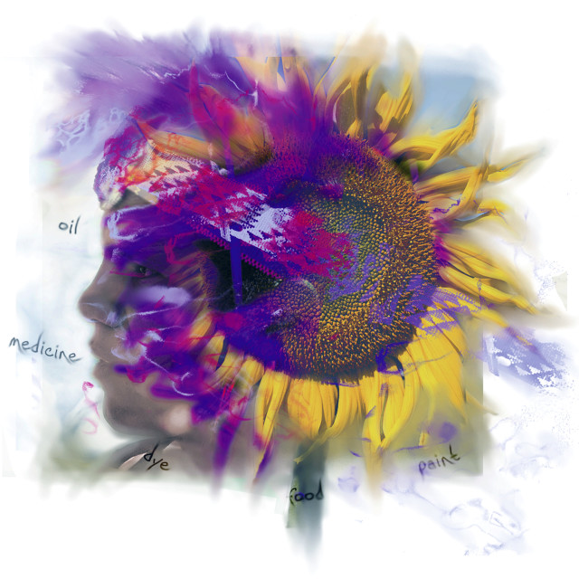 """Sunflower Composite"" stock image"