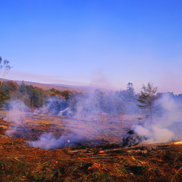 """Burning Scrub After Tree Felling, Co Wicklow, Ireland"" stock image"