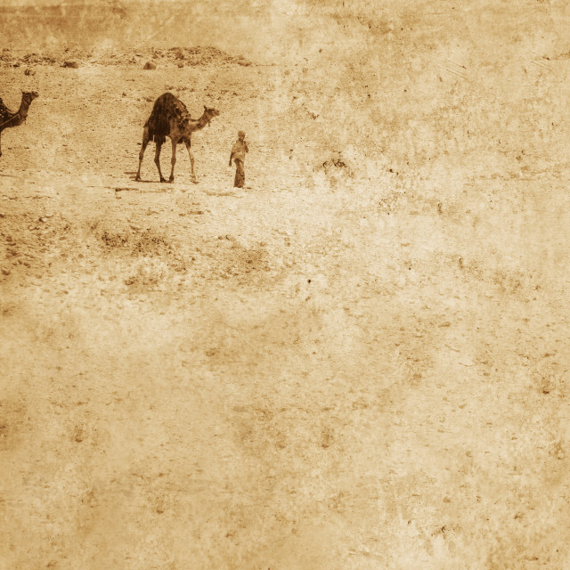 """""""Camels In The Desert"""" stock image"""