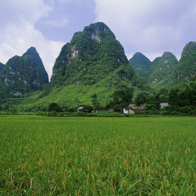"""Rice Field Near Yangshuo In China"" stock image"