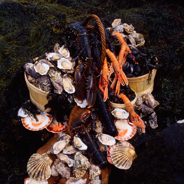 """""""Shellfish, Scallops, Mussels, Oysters, Prawns And Lobsters; Dublin Bay, Ireland"""" stock image"""