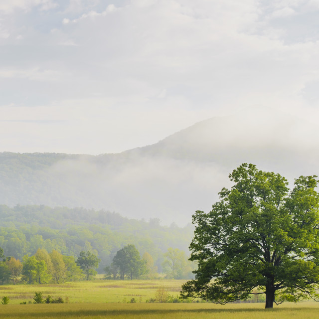 """Early morning in cades cove great smoky mountains national park;Tennessee..."" stock image"