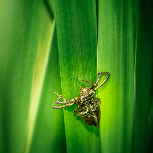 """""""Hard-shelled bug climbing up a leaf"""" stock image"""