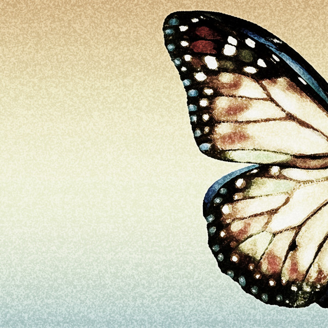 """""""Artistic Butterfly"""" stock image"""