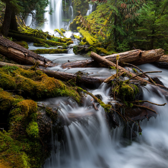 """""""Lush Forest Waterfall"""" stock image"""