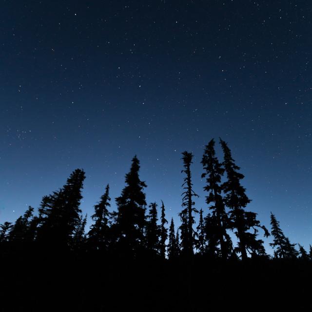 """""""Sky Full of Forest Stars"""" stock image"""