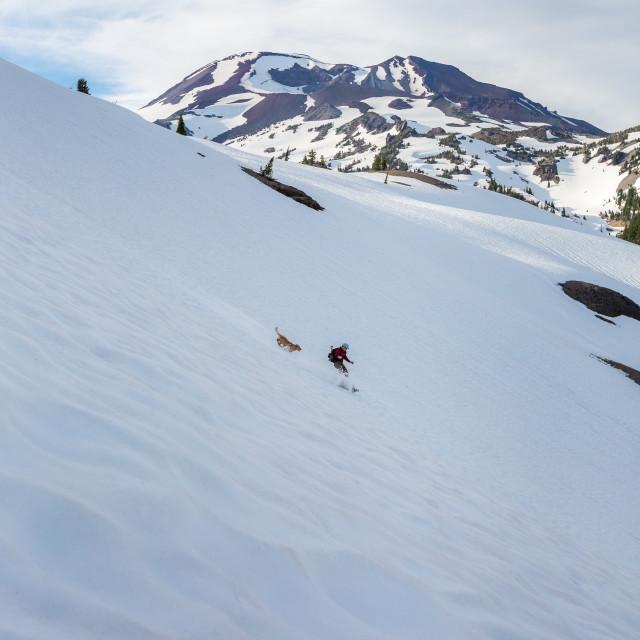 """Dog Chasing Snowboarder"" stock image"