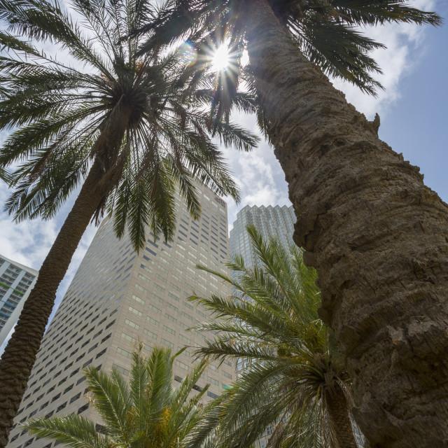 """Skyscraper buildings surround Bayfront Park in Downtown Miami, Miami,..."" stock image"