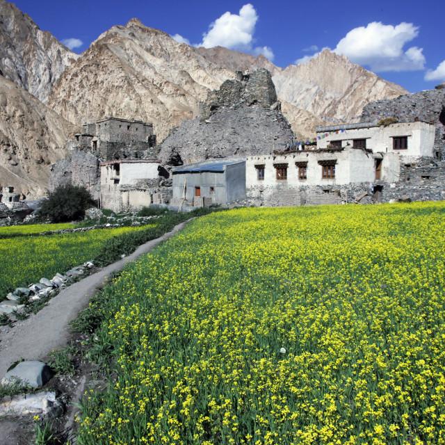 """A mountain village in the Markha Valley, Zanskar, India"" stock image"