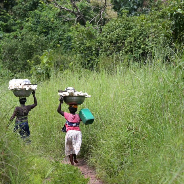 """""""Women carrying platter with cassava on head. Togo."""" stock image"""