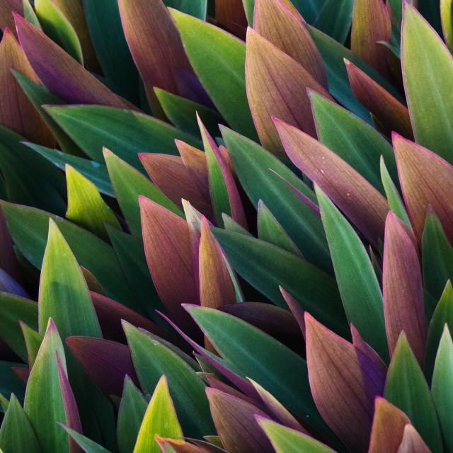 """""""Plants 1"""" stock image"""