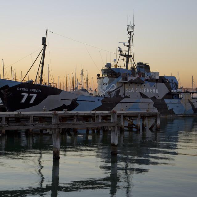 """""""Sea Shepherd"""" stock image"""