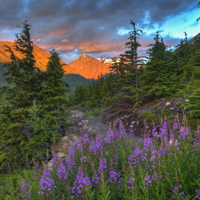 """""""South Fork Trail Near Eagle River At Sunset On A Summer Day In South Central..."""" stock image"""
