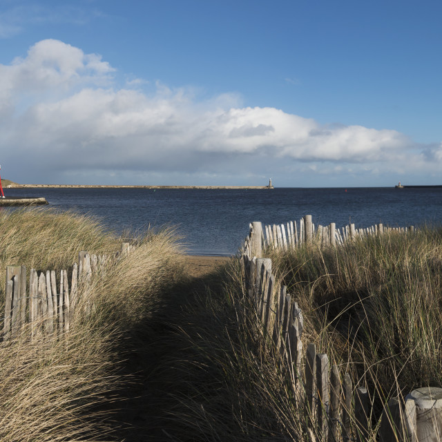 """Path Lined With Wooden Posts And Tall Grass At The Coast, Herd Groyne..."" stock image"