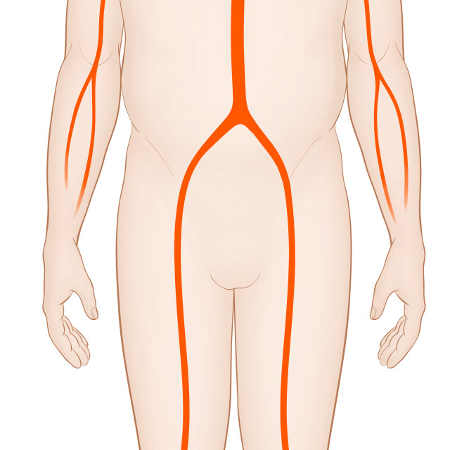 """Diagram Of A Man With A Normal Arterial System And Heart"" stock image"