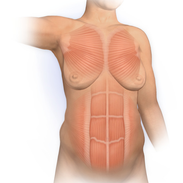 """""""Normal Anterior View Woman With Pectoralis Major, Rectus Abdominus, Muscles"""" stock image"""
