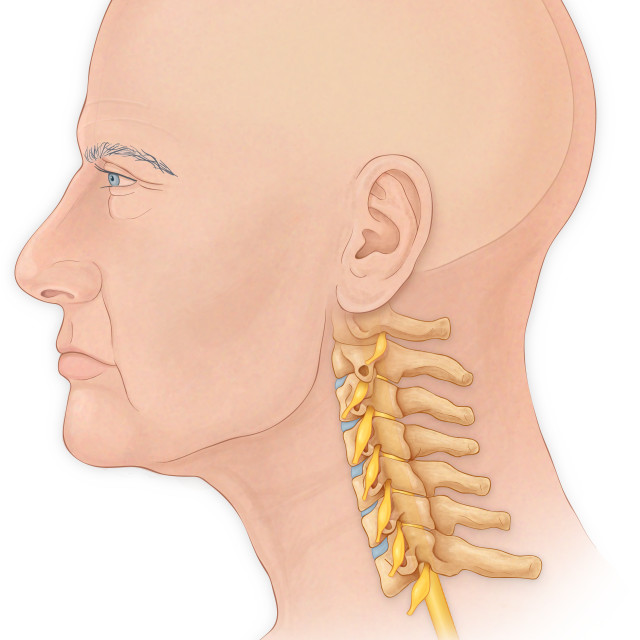 """Normal Lateral View Of A Mans Head And Neck With A Skull, Cervical Vertebrae..."" stock image"