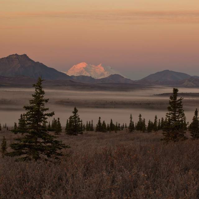 """""""Scenic View Of Denali At Dawn With Fog In Savage River Valley In The..."""" stock image"""