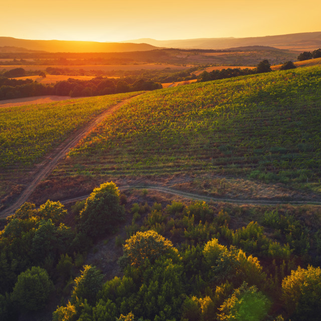 """A Beautiful Sunset over vineyard in Europe"" stock image"