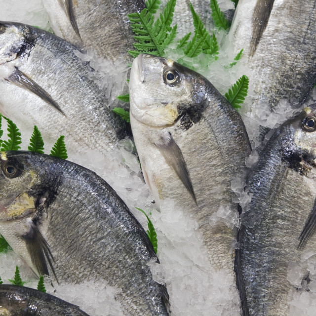 """Gilt-Head Bream On Ice And For Sale In Fish Shop"" stock image"