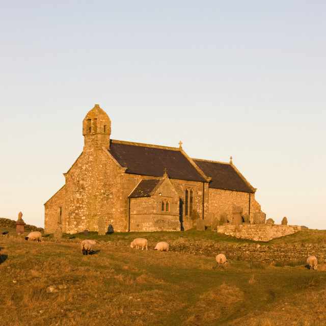 """""""Northumberland, England; Old Stone Church Set In Field With Sheep"""" stock image"""