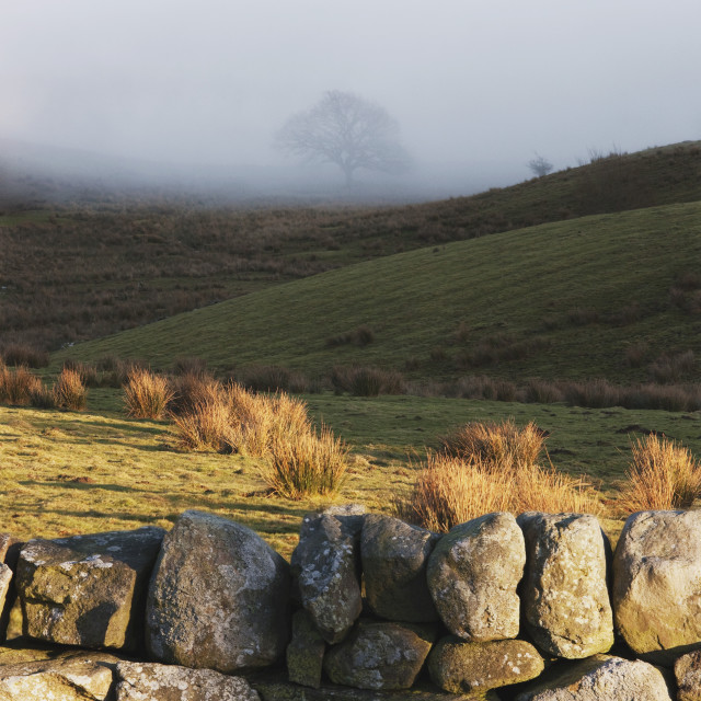 """Durham Dales, County Durham, England; A Stone Fence And Fog Over A Field"" stock image"